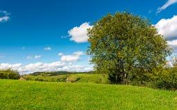 Albero sulla collina rurale erbosa fotografie stock
