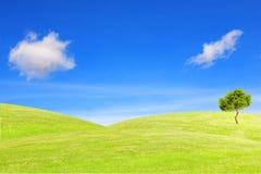 Albero sulla collina sotto il cielo blu Fotografia Stock