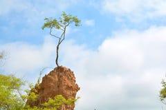 Albero sulla colonna di erosione del suolo fotografia stock