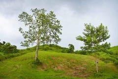 Albero sulla montagna Fotografia Stock