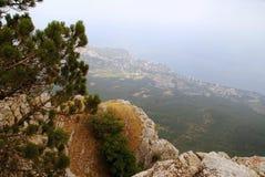 Albero sulla montagna Fotografie Stock Libere da Diritti