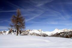 Albero sulla neve Fotografia Stock Libera da Diritti