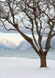 Albero sulla Norvegia Immagine Stock Libera da Diritti