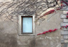Albero sulla parete Immagine Stock