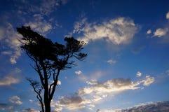 Albero sulla priorità bassa del cielo blu Fotografie Stock Libere da Diritti