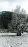 Albero sulla riva di un lago 2 della montagna Fotografie Stock