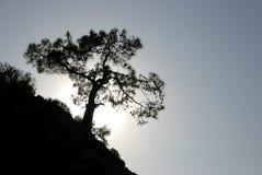 Albero sulla roccia Fotografia Stock