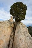 Albero sulla roccia bianca Fotografia Stock