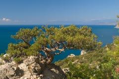 Albero sulla roccia e sul mare Immagine Stock