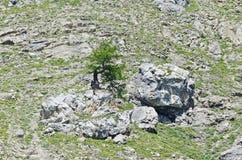 Albero sulla scogliera Fotografie Stock