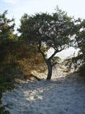Albero sulla spiaggia Immagini Stock