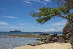 Albero sulla spiaggia Fotografia Stock