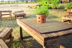 Albero sulla tavola al tramonto fotografia stock