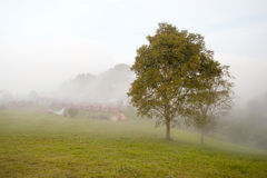 Albero sulla terra con la foschia di mattina Fotografia Stock