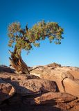 Albero sulle rocce rosse al parco di stato del punto del cavallo morto fotografia stock libera da diritti