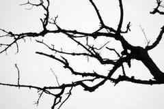 Albero terrificante Fotografia Stock