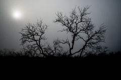 Albero terrificante della nebbia Immagini Stock Libere da Diritti