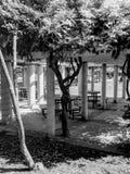 Albero torto in bianco e nero Fotografie Stock Libere da Diritti