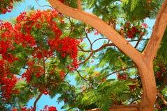 Albero tropicale Fotografie Stock Libere da Diritti