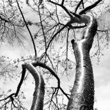 Albero tropicale Fotografia Stock
