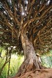 Albero tropicale Immagini Stock