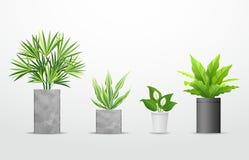 Albero tropicale di vettore nelle collezioni dei vasi del cemento royalty illustrazione gratis