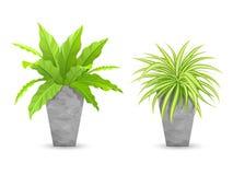 Albero tropicale nelle collezioni dei vasi del cemento royalty illustrazione gratis