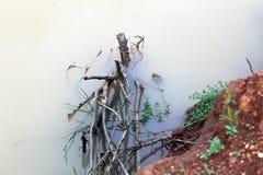 Albero trovato in acqua fotografie stock libere da diritti