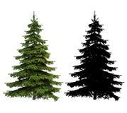 Albero ultra dettagliato dell'abete rosso del Picea con la siluetta inclusa Fotografie Stock