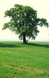 Albero in un campo Fotografie Stock Libere da Diritti