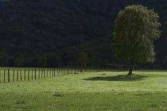 Albero in un campo Fotografia Stock Libera da Diritti