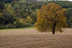 Albero in un campo arato Fotografia Stock Libera da Diritti
