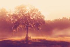 Albero in un campo con i fasci del sole Fotografia Stock
