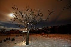 Albero in un campo di neve a Bustarviejo Immagine Stock Libera da Diritti