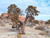 Albero in un deserto fotografia stock