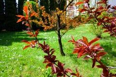 Albero in un giardino Immagine Stock