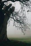 Albero in un parco su una mattina nebbiosa gelida di inverno fotografia stock