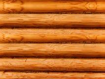 Albero un pino Immagine Stock