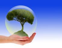 Albero in una bolla a disposizione fotografia stock libera da diritti