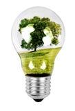 Albero in una lampadina Immagine Stock