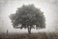 Albero in una nebbia Fotografia Stock Libera da Diritti