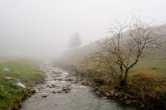 Albero in una nebbia in Steg Immagine Stock Libera da Diritti
