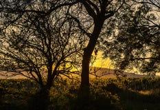 Albero una quercia sul tramonto immagini stock