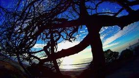Albero in una spiaggia Carlsbad California di Ponto di groviglio 7 stock footage