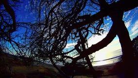 Albero in una spiaggia Carlsbad California di Ponto di groviglio 8 video d archivio