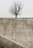 Albero urbano durante l'inverno Fotografia Stock Libera da Diritti