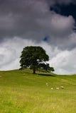 Albero in vallate del Yorkshire Fotografie Stock Libere da Diritti