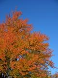 Albero variopinto di autunno fotografia stock