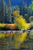 Albero variopinto e fogliame che riflettono nel fiume di Merced in Yo Fotografia Stock