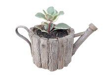 Albero in vasi di legno Fotografie Stock Libere da Diritti